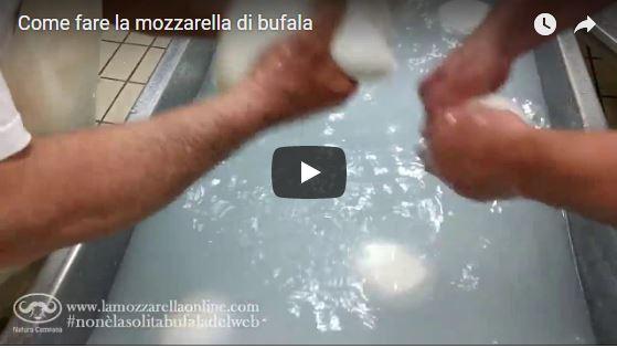 Come fare la mozzarella di bufala campana